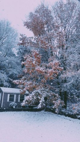 Snow falls on leaves colored gold and orange